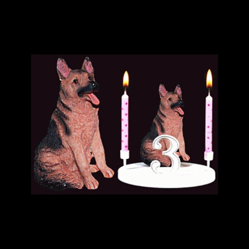 Le chien berger allemand pour anniversaire