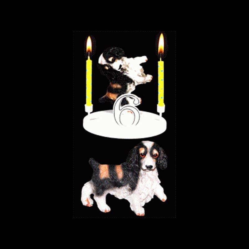 Le chien cocker pour anniversaire