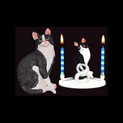 Le chat black et white pour anniversaire