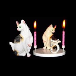 Le chat blanc tacheté pour anniversaire