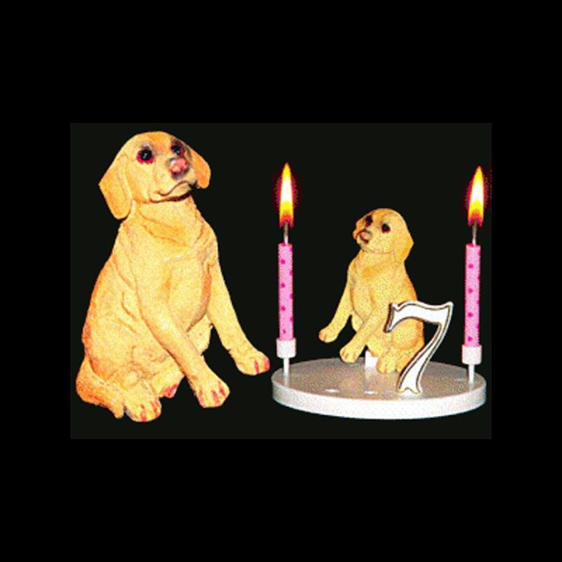 Le chien labrador pour anniversaire