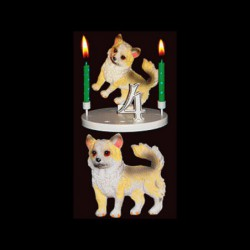 Le chien loulou pour anniversaire