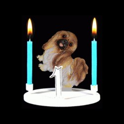 Le chien pékinois pour anniversaire