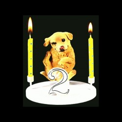 Le chien Golden Retriver pour anniversaire