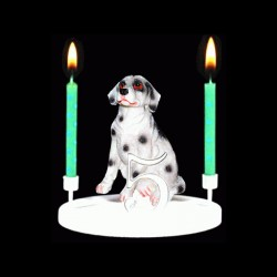 Le chien dalmatien pour anniversaire