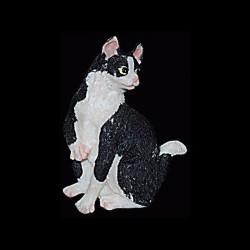 Le chat white et black pour anniversaire