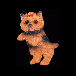 Le chien yorkshire pour anniversaire